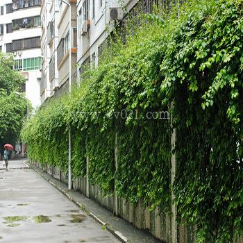 小区景观绿化墙养护施工  详细说明:    植物墙是一个小型生态系统,它